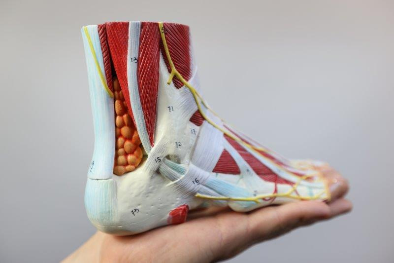 Pain Above the Heel in the Back of the Foot