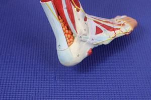 Peroneus longus tendonitis treatment peroneus brevis tendonitis treatment