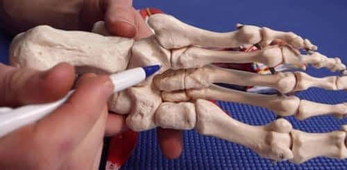 Cuboid bone peroneal tendon groove