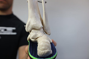 Back of the ankle joint anatomy: tibial fibula talus