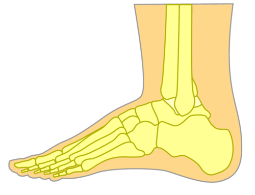 Top of the Foot Bones Side view