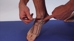 PT tendon insertion os naviculare navicular bone