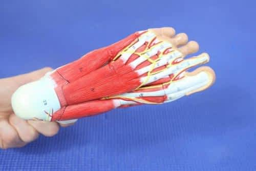 Pinched Nerve in the Foot or Toe: The Best Home Treatment 2020