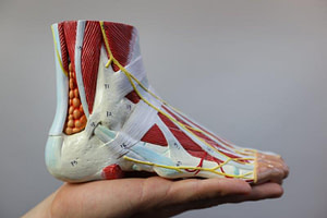 foot Pain Under Ankle: Best Diagnosis and Treatment
