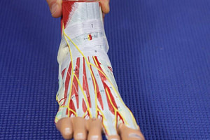 Top of the foot pain nerve pain to the medial dorsal cutaneous nerve